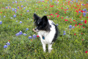 Checking Out the Bluebonnets