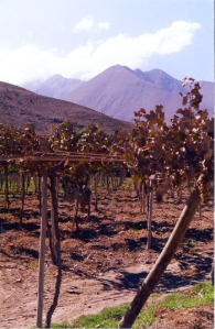 Grape vines and the Andes Mountains near Vicuña, Chile.