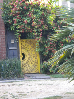 Flowering Vines Overhanging the Yellow Gate