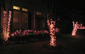 Outside light crawl up the skinny tree trunks and cover the holly bushes.